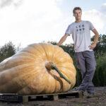 Hoe kweek ik een reuzenpompoen Atlantic Giant. How to grow a giant pumpkin